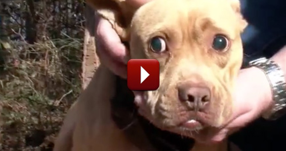 Countless Dogs Were Subjected to Daily Torture, Until This Epic Rescue