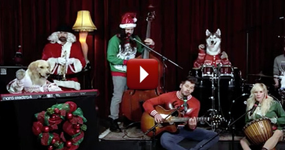 A Doggie Band Plays Little Drummer Boy - You Gotta See This