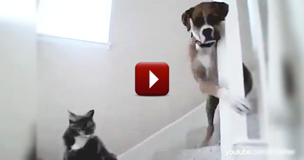 The Epic Struggle Between Dogs and Cats Continues - Watch the Hilarious Video