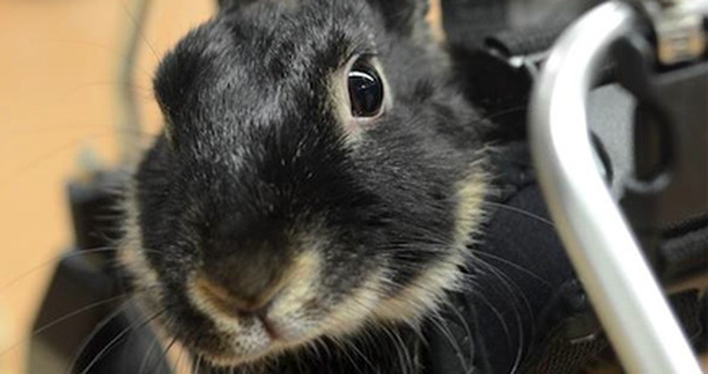 This Bunny Was Thrown Out Because She Was Paralyzed... but She Got a Hoppy Ending