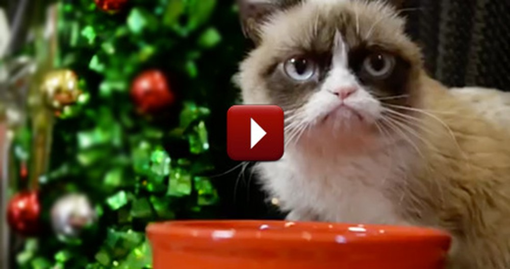 Even Famous Internet Cats Celebrate Christmas - and It's Adorable