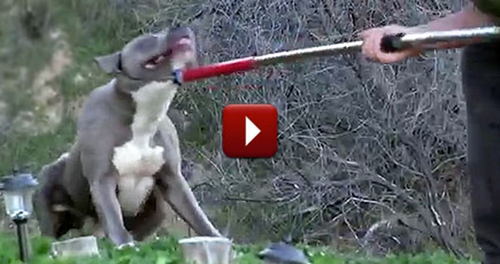 Terrified and Injured Dog is Saved Just in Time by Heroes