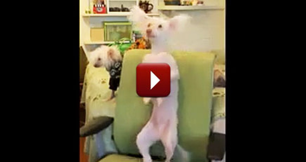 Silly Dog Has a Backscratching Dance Party