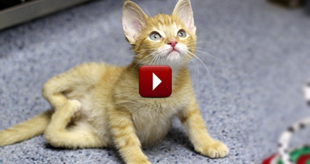 He Was Born with Backwards Legs and a Heart of Gold - an Inspirational Kitten