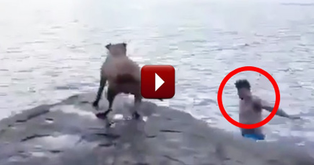 Cautious Dog Jumps to the Rescue When He Thinks Daddy is in Trouble