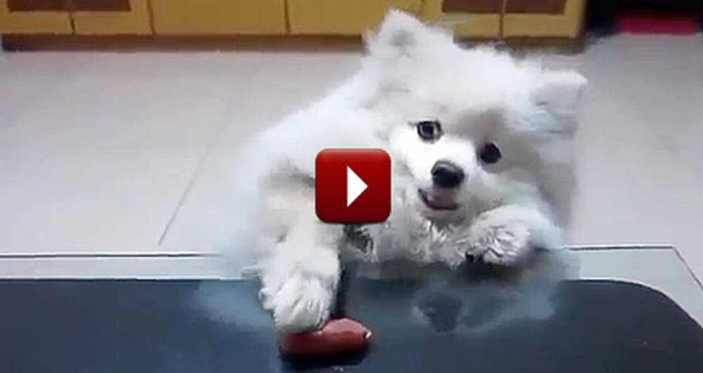 This Adorable Puppy Will Do ANYTHING to Get His Treat