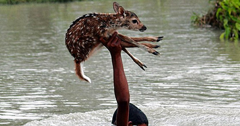 Brave Teen in Bangladesh Risks His Life for an Innocent Creature