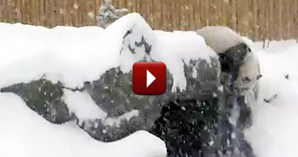 Hilarious Giant Panda Sees Snow for One of the First Times - And LOVES It