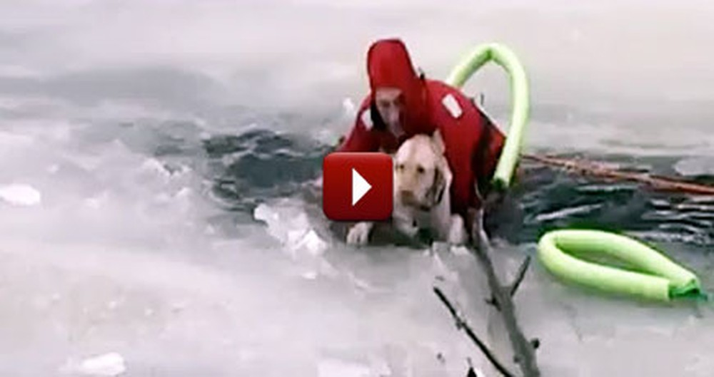Good Samaritans Save a Dog Trapped in an Icy Pond