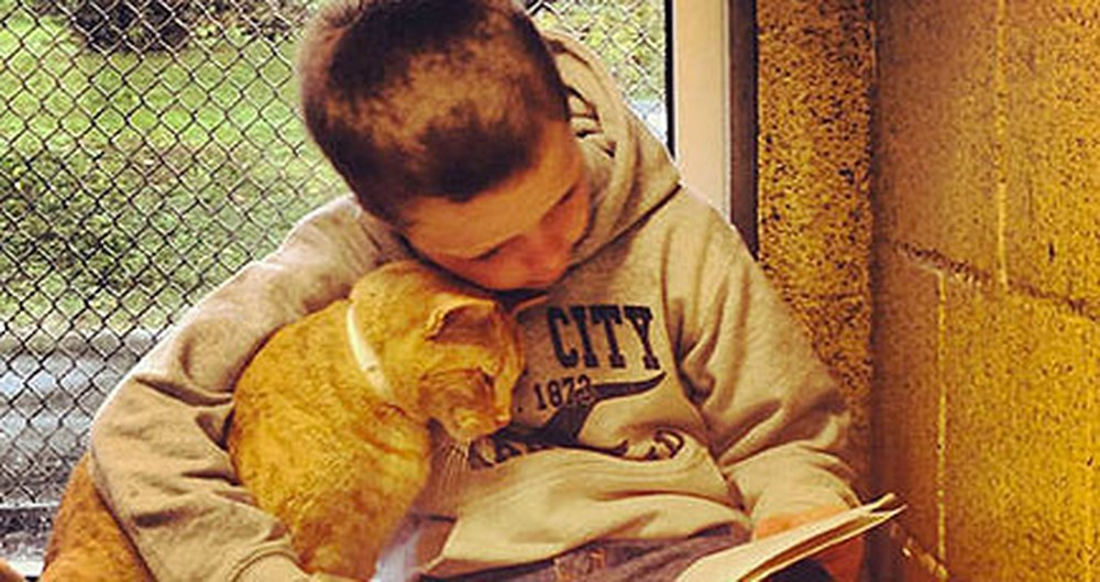 Kind Children Read to Kitties at This Animal Shelter - Too Sweet for Words