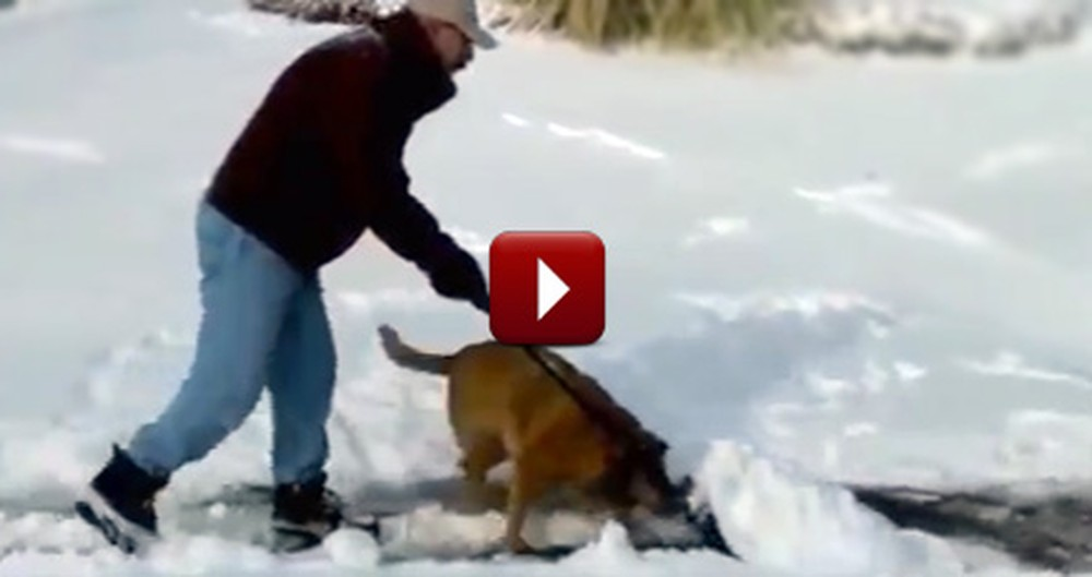 Humans Get Some Help During the Recent Snow Storm From Their Furry Friends :)