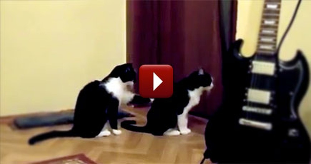 One Cat Tries to Apologize to Another - and the Result is Hilarious