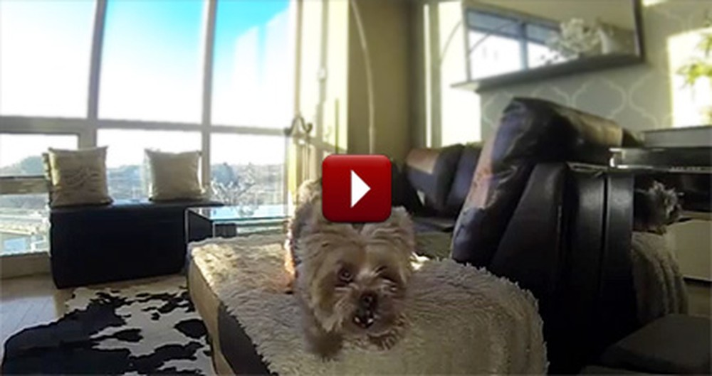 Tiny Dog Has an Epic Struggle While Playing Fetch - but Gets a Happy Ending
