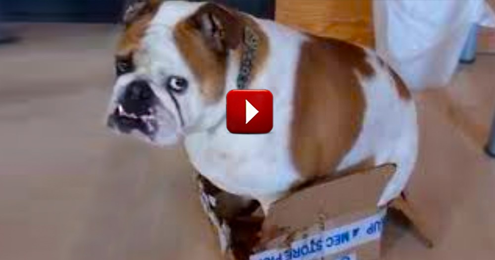 These Silly Animals Love Boxes That Are Just TOO Small For Them - How Cute