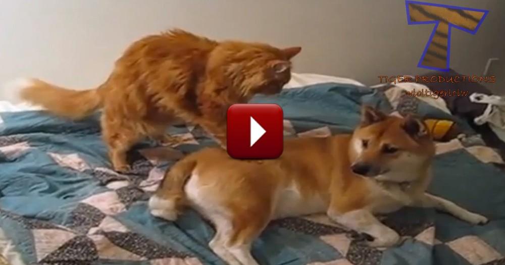 Sweet Kitties Just Love Their Puppy Friends So Much