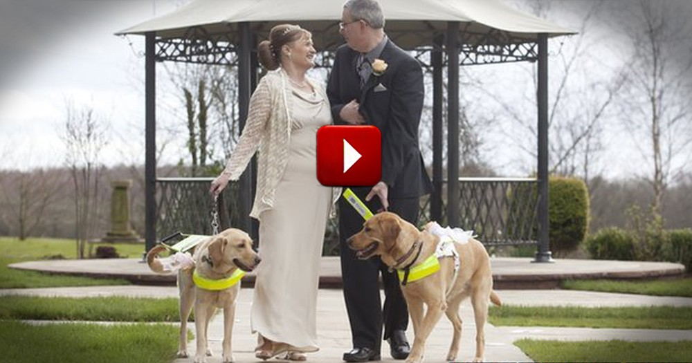 Two Guide Dogs Fell In 'Puppy' Love... and Then Their Owners Got Married!