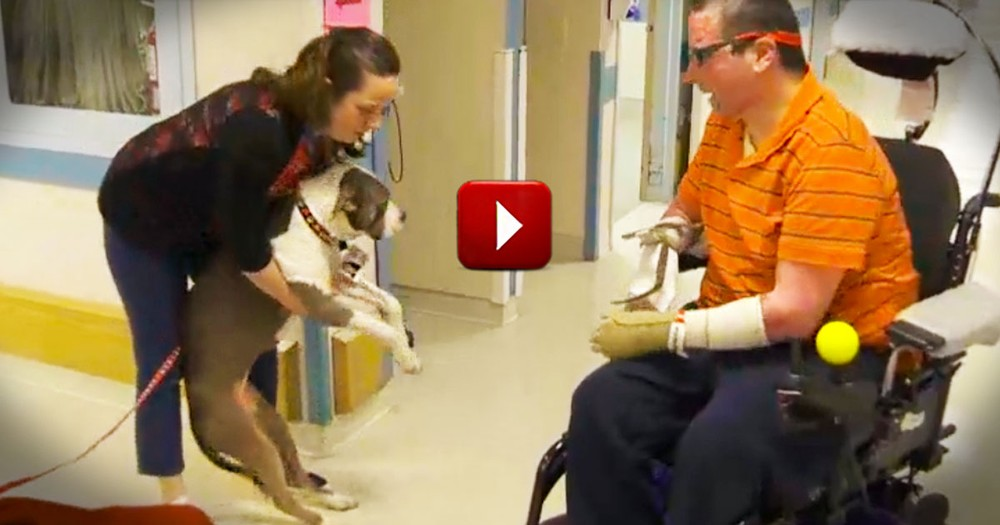 You Will Never Believe What Makes This Dog So Special. Her Secret Will Melt Your Heart!