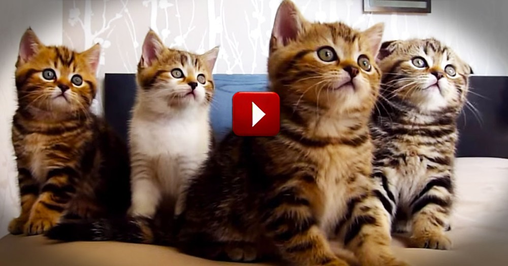 Hilarious Dancing Cats Will Make Your Day