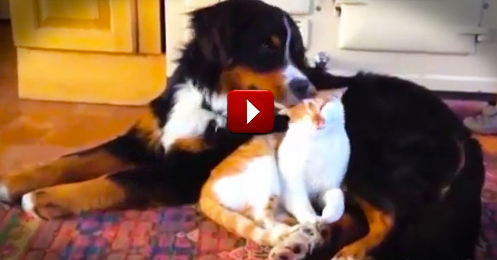 It Looked Like They Were Just Going to Fight Like Cats And Dogs. Until 2:06--Awwww!
