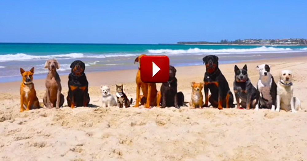 This Is One Beach Trip I Wish I'd Taken. The Lone Kitty Put The Biggest Smile On My Face!