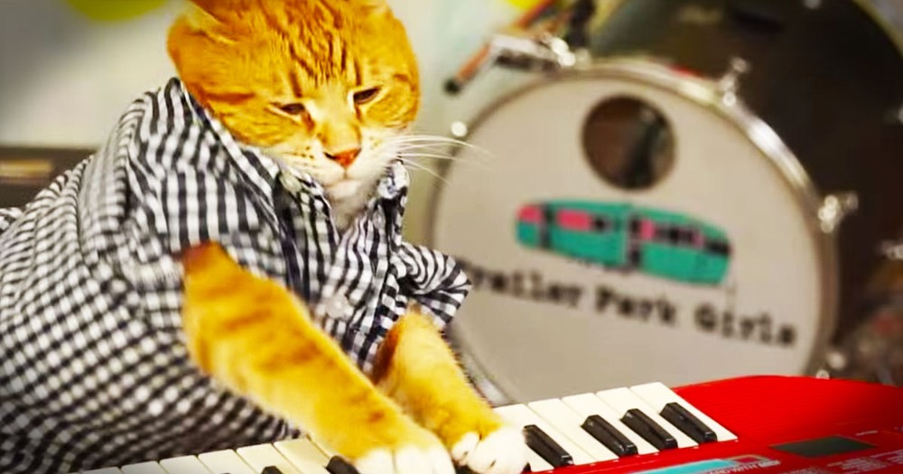 1 Kitty, 88 Keys, And 96 Tears Adds Up To ADORABLE!  And Now My Day Was Just Made.