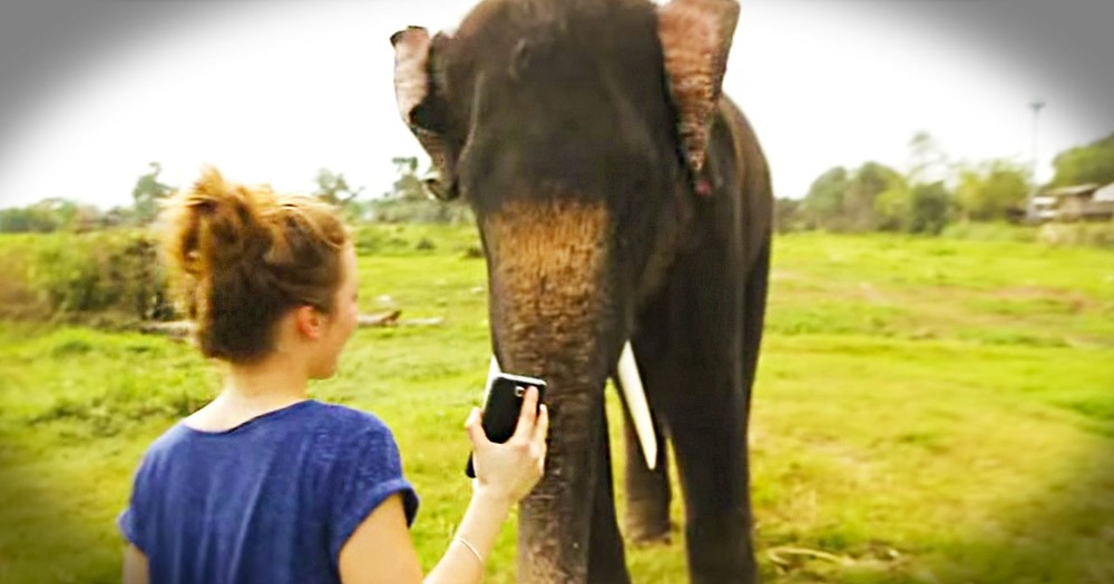 What This Elephant Does With A Cell Phone Is Amazing. I Can Barely Even Turn Mine On! LOL