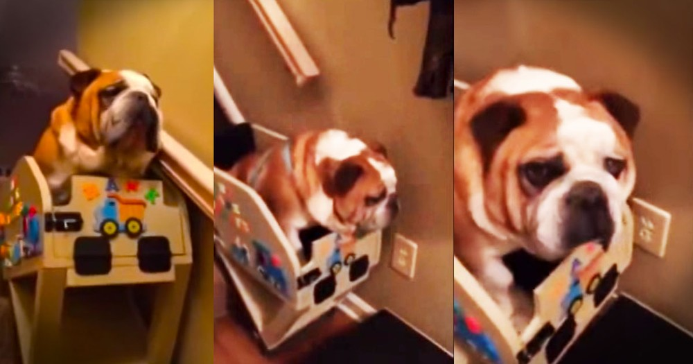 When You Learn Why These Stairs Look Like a Puppy Amusement Park, You'll Be Moved.  Awww!