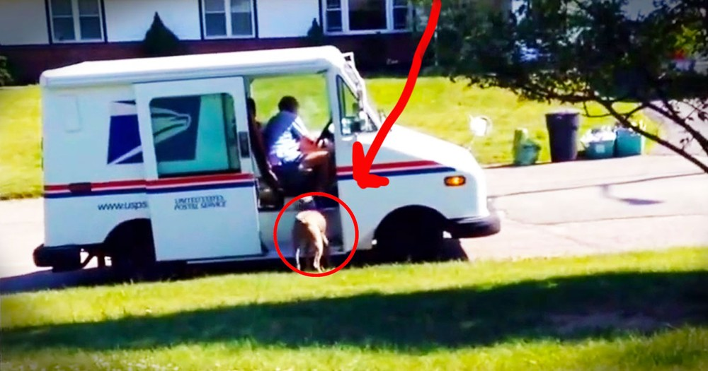 When I Saw This Dog Run After The Mail Truck, I Got Nervous. But What Happened Next Made My Day!