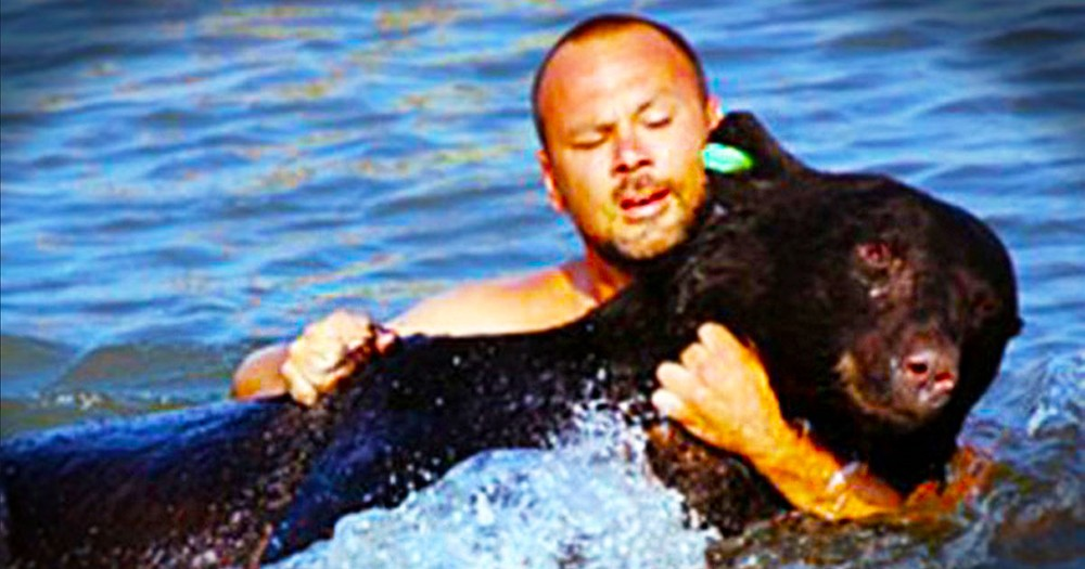 This Bear Was Tranquilized and Almost Drowned in The Ocean. But A Hero Risked it All to Save Him.