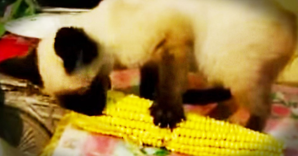 I Don't Know What I Love More. This Kitty's Odd Snack, Or The Fact That He's Saying, 'Yum Yum'!