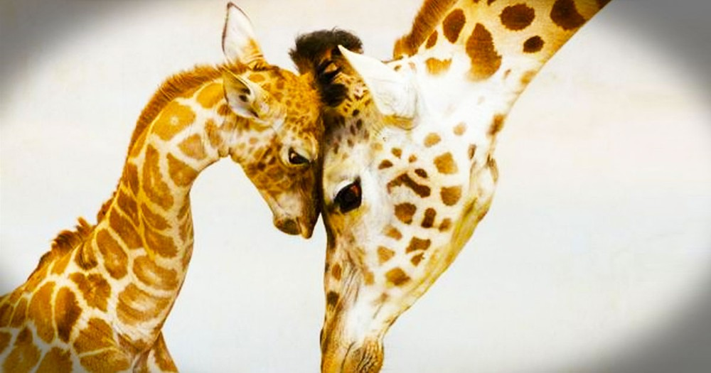 These 20 Animal Parents are Loving Their Babies. No.19 Made Me Aaawww!
