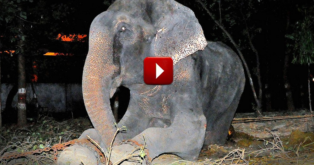 This Elephant Was Chained And Beaten For 50 Years. But Now He's Free And I'm Not The Only One Crying