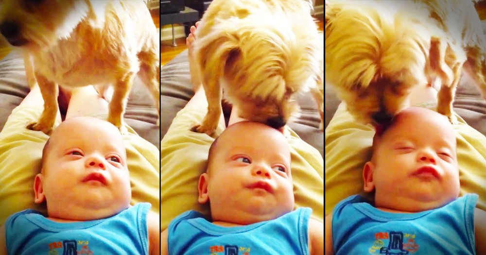 This Pup Has An Unusual Way Of Putting His Baby To Sleep. And THIS, This Is Adorable!