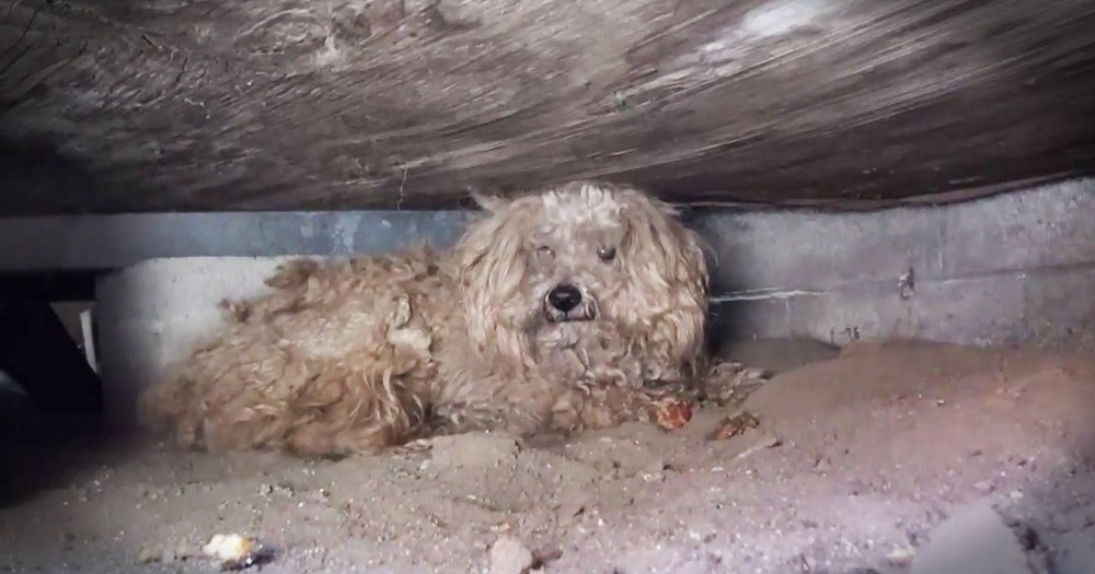 This Poor Abandoned Dog Waited Under A Shed For A Year. Now Help Has FINALLY Arrived!