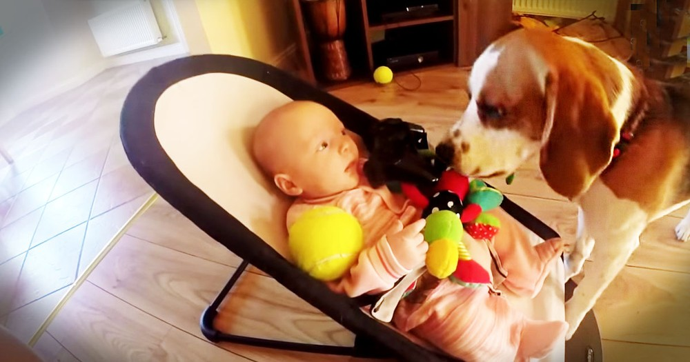 When This Pup Made His Baby Human Cry, He Felt Just Terrible. How He Apologizes Is Just Too Cute!