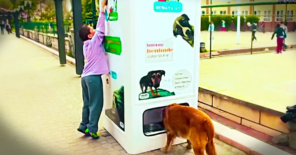How They're Using Trash to Care for Homeless Dogs Just Blew My Mind. You've Got To See This!