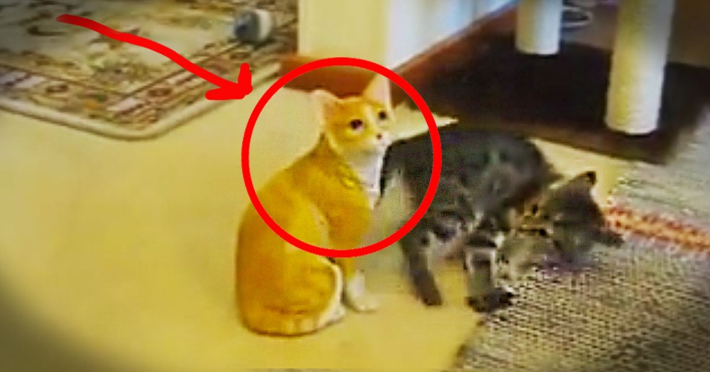 The Truth About This Cat Is Pretty Simple. But The Kitten Was Completely Shocked LOL!