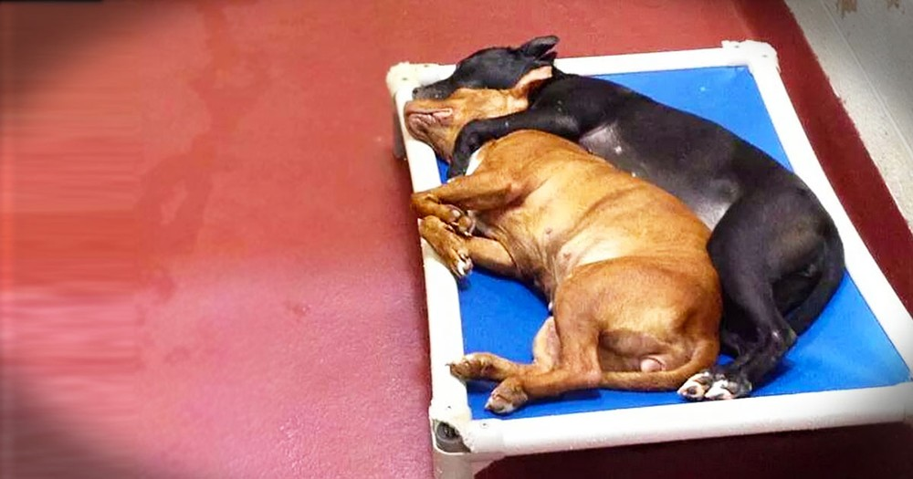 2 Shelter Dogs Share the 1 Thing To Bring Them Comfort. So Moving!