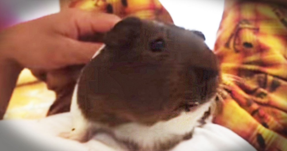 This Is One Grumpy Guinea Pig! And If I Was His Friend Christian, I'd Be Crying In A Corner! LOL