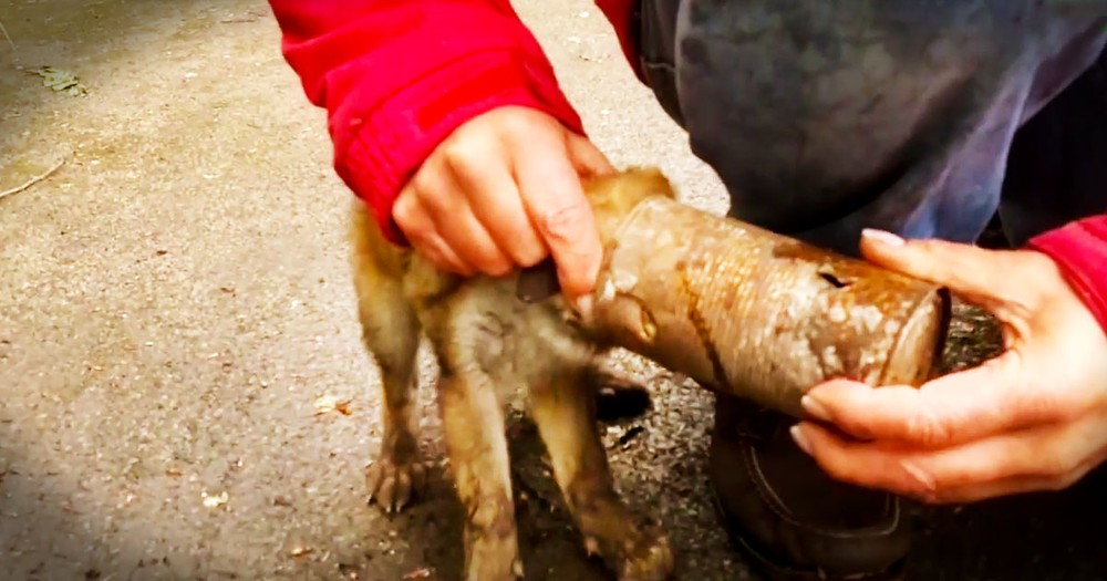 This Baby Fox Was Trapped In A Deadly Situation. Until Kind Humans Gave Him The Sweetest Rescue!
