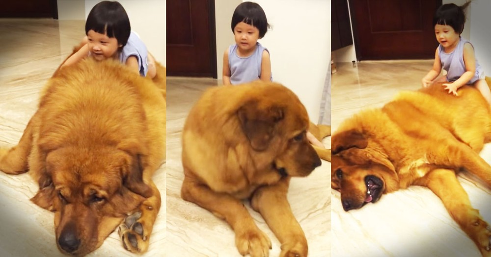 At First I Thought This Girl Was Wrestling A Bear. What's Really Happening Will Melt Your Heart!