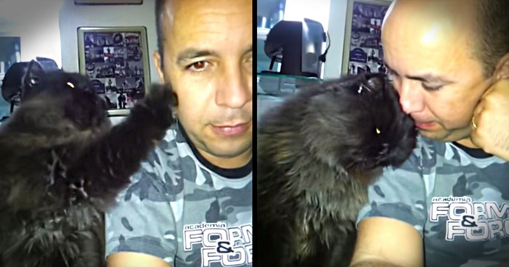 Apparently, This Sweet Kitty Wants Attention. And HOW She Gets It Is The Cutest Thing Ever!