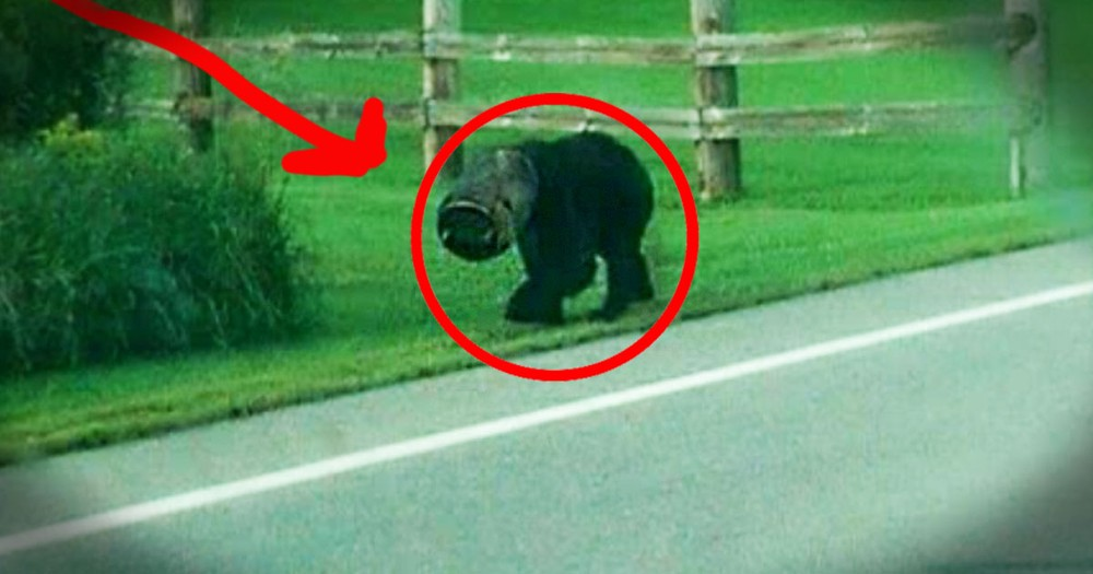 What These Men Did for This Bear Would've TERRIFIED Me. Thank God For Their Brave Act of Kindness!