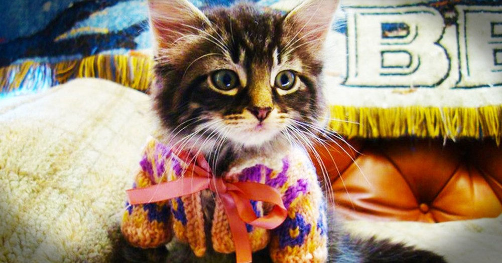 These 16 Animals In Sweaters Are Out of Control Cute.This Time I Couldn't Even Pick a Favorite.