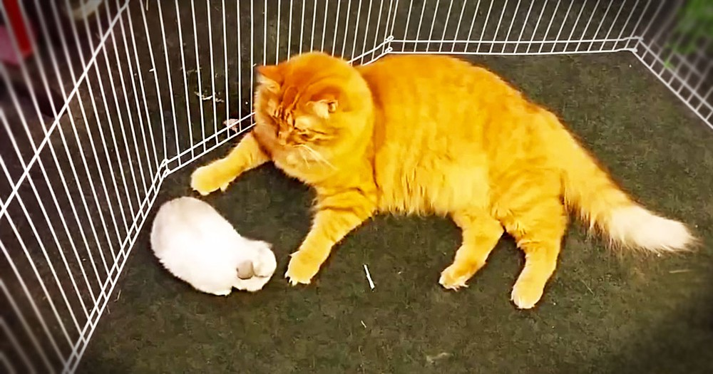 This Daddy Kitty Has Some Rather Odd Babies. But Watching Him Love On Them Made My Day!