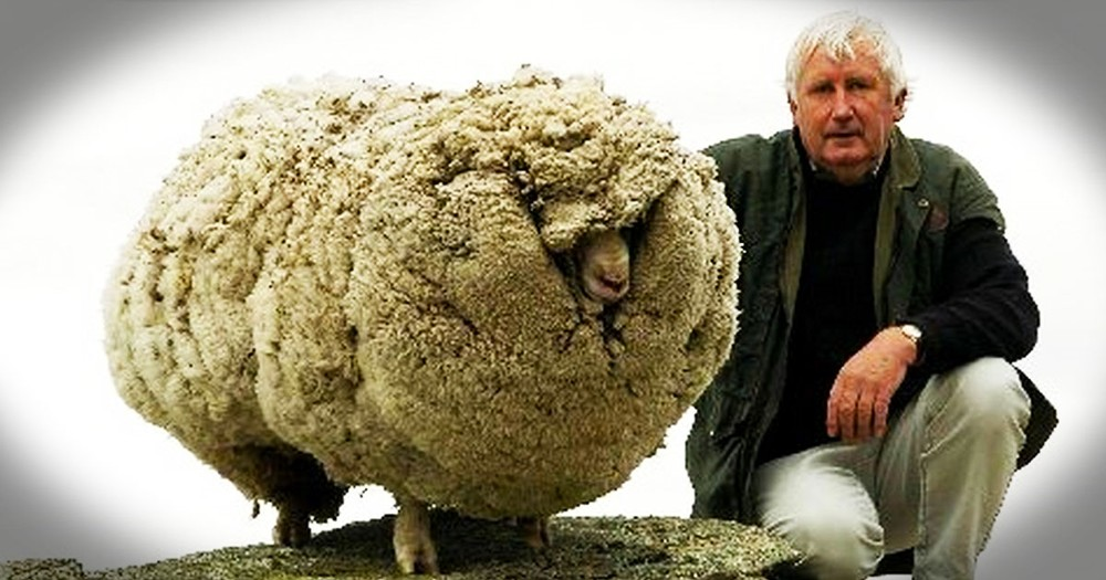 A Baaad Sheep Wandered Away And Got Lost. What Happened Next Reminded Me Of Why I Need JESUS!
