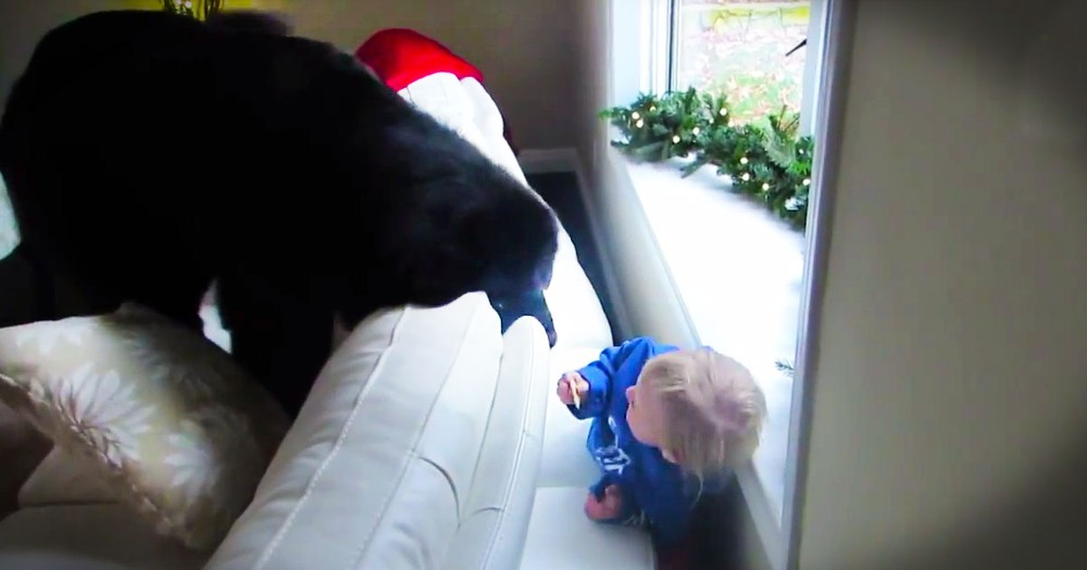 This Sweet Girl Has The BEST Hide And Seek Buddy--Her Pup! This Epic Game Just Can't Get Any Cuter.