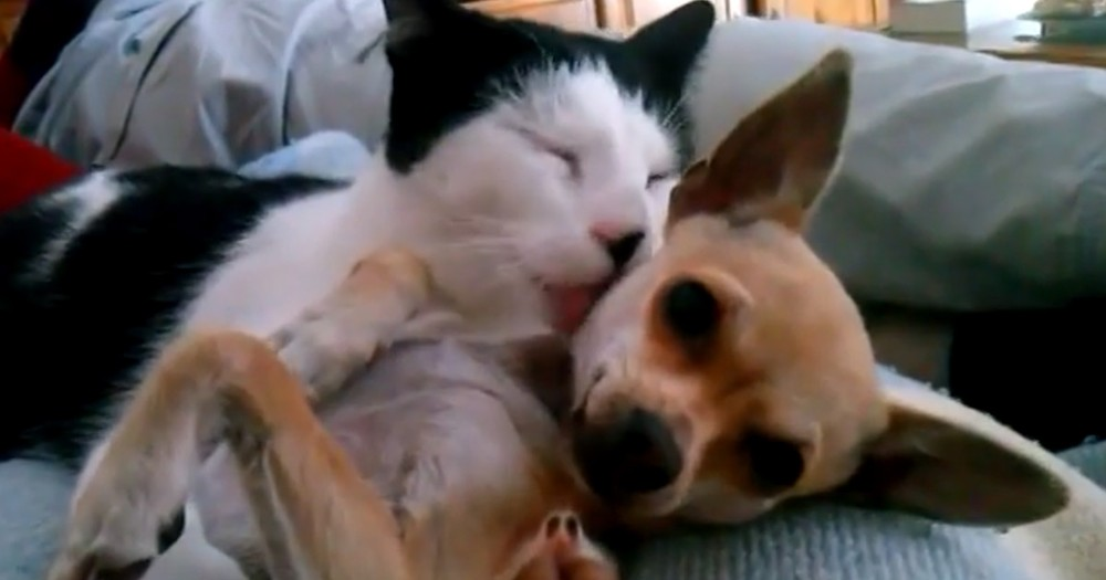 This Kitty Just 'Adopted' A New Baby. And It's PAW-sitively Adorable!