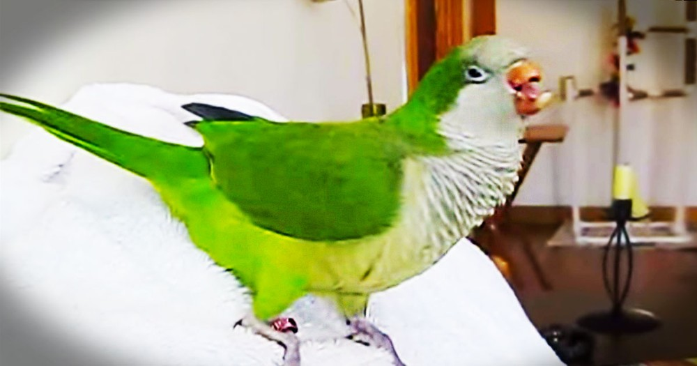 This Rescue Parrot Can't Stop Laughing. And When You Hear Him, You'll Be Cracking Up Too!