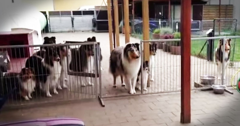 These Patient Pups Have The BEST Manners! This Is One You Have To See To Believe!